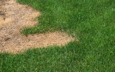 Trouble with Your Natural Lawn? NewGrass Can Help!